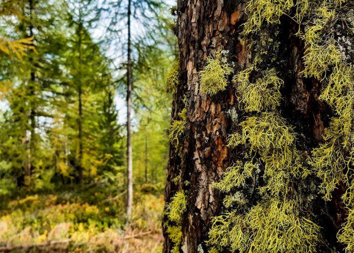 Wald und Forstwirtschaft